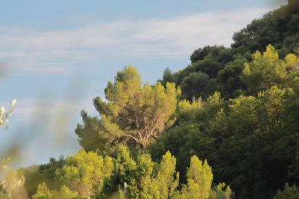 Azur Naturel - Producteur éco responsable de Spiruline, Safran et PPAM dans les Alpes Maritimes (Grasse)