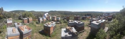 Butinons miel - Apiculteur installé en Isère pratiquant une apiculture pastorale de transhumance