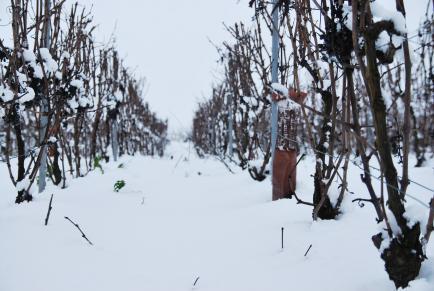 CHAMPAGNE CHARTON-GUILLAUME - Production et vente de Champagne depuis 4 générations