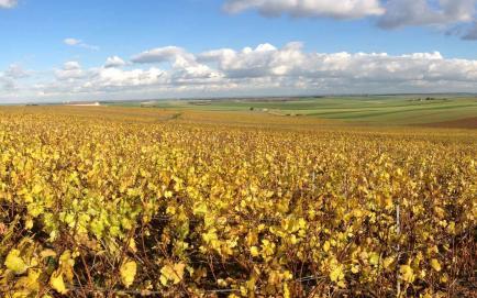 Champagne Philippe de Langoz - Venez découvrir nos Champagnes !