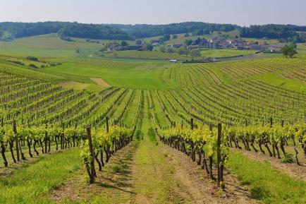 CHAMPAGNE WIRTH-MICHEL - Notre exploitation est située sur les Côteaux Sud d'EPERNAY : Capitale du Champagne.