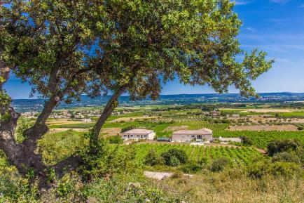 Château de Valloubière - Venez découvrir nos vins en Coteaux du Languedoc !