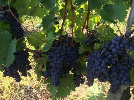 Château du Masson - Venez découvrir nos vins de Bordeaux !