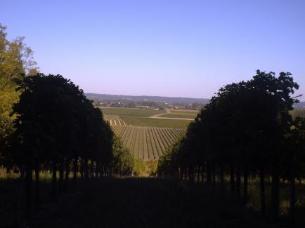 Château Haute Brande - Vigneron de père en fils, entre Bordeaux et Bergerac et avec passion !