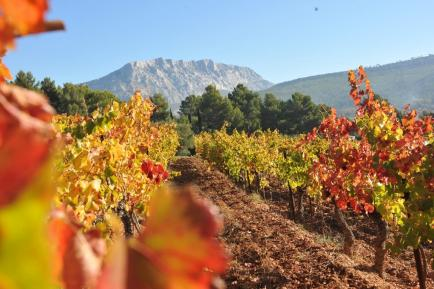 Château Henri Bonnaud - Venez découvrir nos vins sur la très confidentielle AOC Palette !