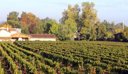 Château la Ganne - Venez découvrir nos vins bio de Bordeaux, Pomerol et Saint Emilion Grand Cru !