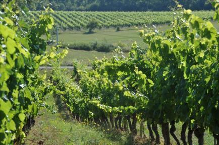 Château Lacapelle Cabanac - Vin de cahors bio du chateau Lacapelle-Cabanac. Vigneron Indépendant.