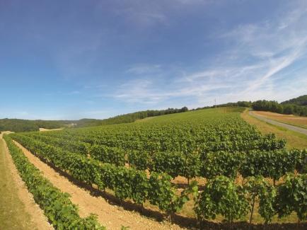 Château Lamartine - «Elever la qualité de nos vins au plus haut rang, telle est notre vocation et notre passion.»
