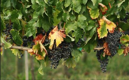 Château Portier - Venez découvrir nos vins en Bourgogne, Saint-Véran et Beaujolais !