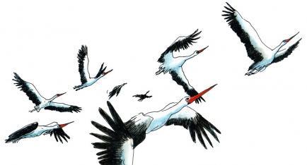 Christophe Mercier - Livres illustrés pour les enfants