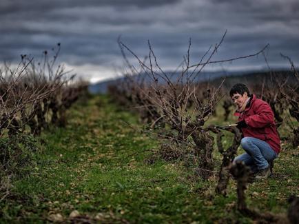 Clos de l'Anhel - Vins biologiques de Corbières