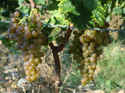 Clos Fougères, la face cachée du fruit - Ferme familiale depuis 1882, Bio dès 1998, nous produisons fruits, légumes, et vins IGP
