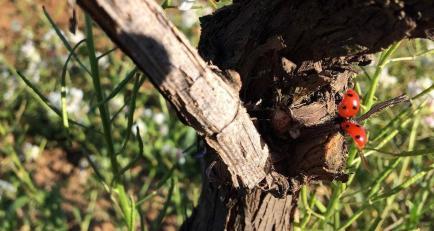 Clos Sainte-Pauline - Venez découvrir nos vins Languedoc !