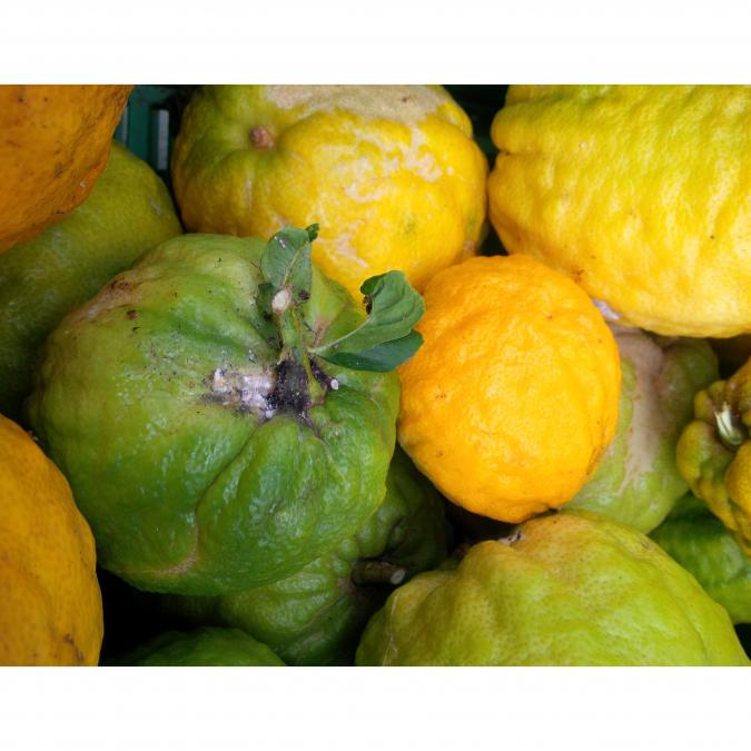 DA NOI! - Cedrat Confit - Fruit Confit au Sirop