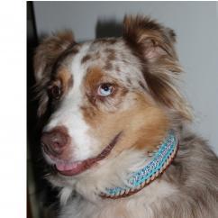 Delhomme et du Chien Création - Collier Iouky - Collier pour chien