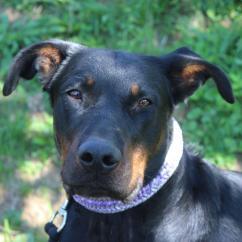Delhomme et du Chien Création - Tressage Nina - Collier pour chien