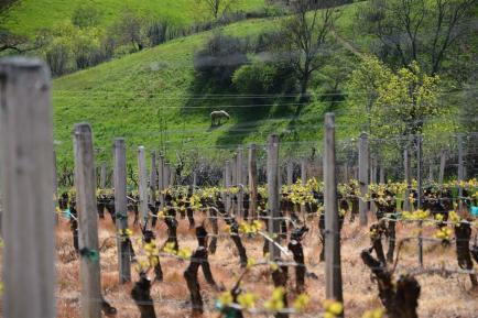 Domaine Balandras - Le domaine Balandras cultive ses vignes dans la plus pure tradition bourguignonne.