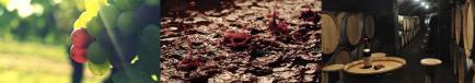 Domaine Berthaut - Venez découvrir nos vins Bourgogne !