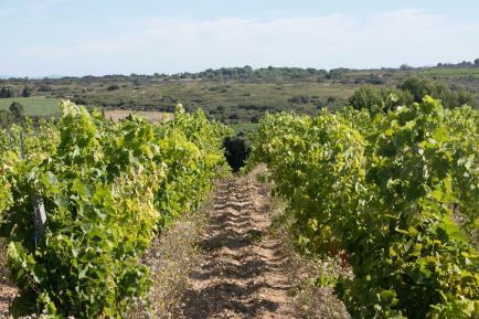 Domaine de Blanville - Venez découvrir nos vins du Langedoc !