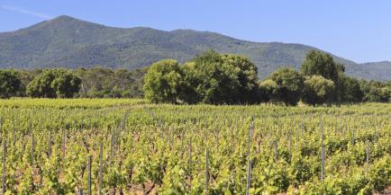 Domaine Borrely Martin - Venez découvrir nos vins en Côtes de Provence !