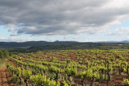 Domaine Bourdic - Découvrez  nos vins biologiques de forte caractère du Languedoc