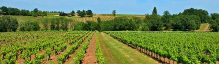 Domaine de Grange Neuve - Venez découvrir nos vins de Monbazillac et Bergerac qui sont élaborés avec passion et amour !