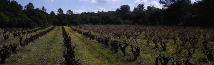 Domaine de l'Escattes - Venez découvrir nos vins Biologiques !