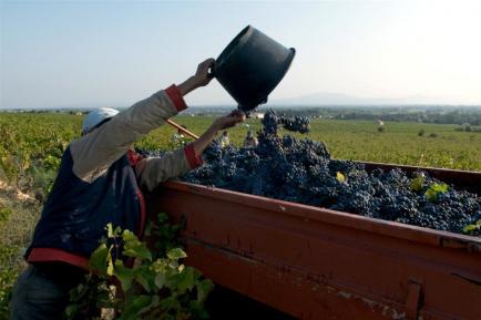 Domaine De La Royère - Le Domaine dans le Luberon, près de Avignon, vous propose sa gamme de vins (AOP, IGP...).