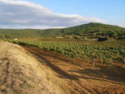 Domaine de Longueroche - Venez découvrir nos vins Corbières !