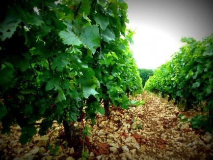 Domaine de Loye - Venez découvrir nos vins de Menetou-Salon ! Frais de port offert