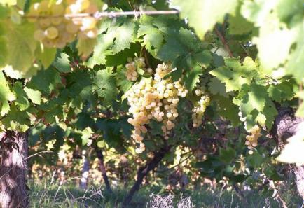 Domaine de Malartic - En plein coeur du Gers, nous vous proposons des Vins de Pays de Côtes de Gascogne.