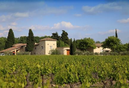 Domaine de Mas Caron - Au pied du Mont Ventoux, découvrez nos vins issus de ce magnifique terroir.
