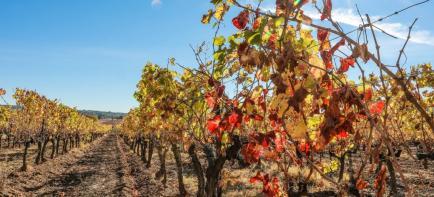 Domaine Saint Mitre - Venez découvrir nos vins Côteaux Varois en Provence !
