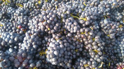Domaine de Thoiry - Du Beaujolais, aromatique et facile à boire, au Côteaux Bourguignons chaleureux et plus structuré !