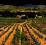 Domaine des Dames du Chapître - Venez découvrir nos vins en Beaujolais !