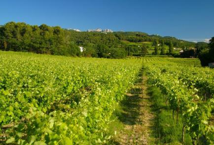 Domaine des Pasquiers - Venez découvrir nos vins Côtes du Rhône !