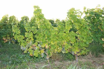 Domaine des Tabourelles - Venez découvrir nos vins du Val de Loire !