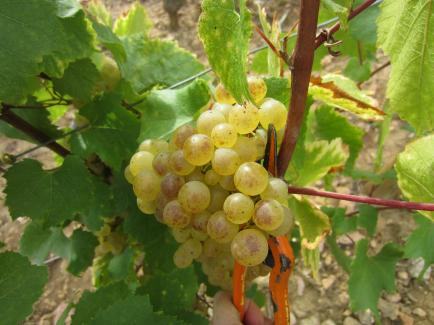 Domaine du Chalet Pouilly - Venez découvrir nos vins Pouilly-Fuissé, Saint-Véran et Mâcon-Solutré.