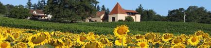 Domaine du Crampilh - Venez découvrir nos vins Madiran, Pacherenc du Vic-Bilh et Comté Tolosan !