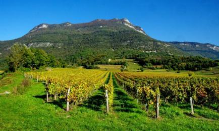 Domaine Eugene Carrel & Fils - Venez découvrir nos vins de Savoie !