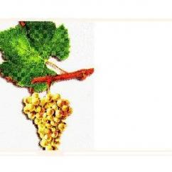 """Domaine Eugene Carrel & Fils - Bugey """"Chardonnay""""  Cuvée Marcel Perrin - blanc - 2014 - Bouteille - 0.75L"""