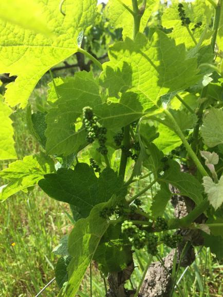DOMAINE FLORIMOND - Venez découvrir nos vins de Bordeaux Bio !