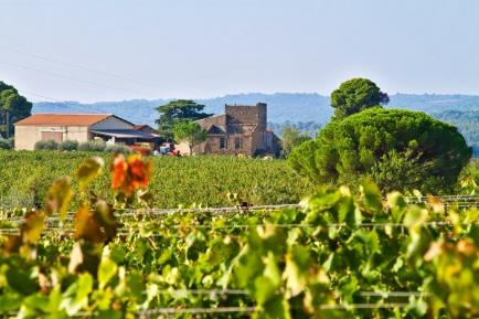 Domaine Galtier - Venez découvrir nos vins du Languedoc !