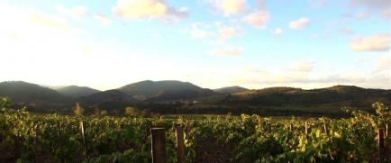 Domaine Grand Guilhem - Venez découvrir nos vins faits de Carignan, Grenache, et Syrah !