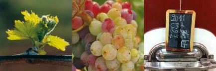 Domaine le Clos des Lumières - Venez découvrir nos vins Côtes du Rhône !