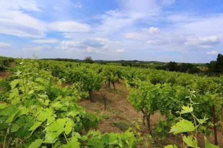 Domaine Le Conte des Floris - Venez découvrir nos vins du Languedoc !