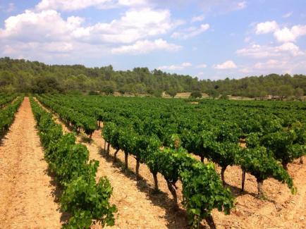 Domaine Les Grandes Costes - Venez découvrir nos vins du Languedoc !