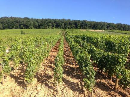 DOMAINE LUDOVIC BELIN - Viticulteur en lutte raisonnée à Pernand-Vergelesses, nous vous proposons notre production.