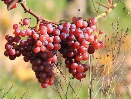 Domaine Mas St-Jean - Le Domaine est au coeur des Côtes du Rhône et propose des vins exceptionnels en rouge, rosé.