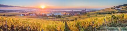 Domaine Mersiol - Venez découvrir nos vins d'Alsace !